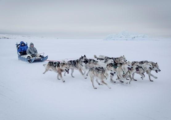 Dogsledding Greenland Arctic