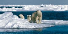 Arctic Wildlife Greenland